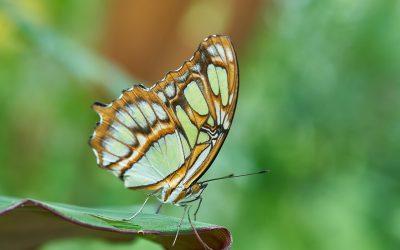 Lectia fluturelui – Dezvoltarea copilului