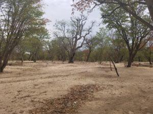 Desert Kalahari - Namibia